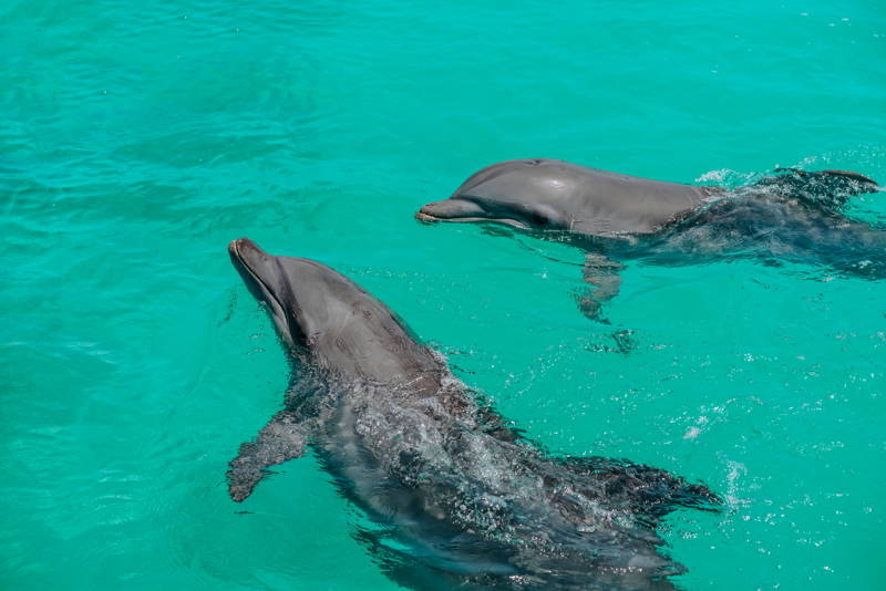two dolphins. The best of nature in the Samana Peninsula