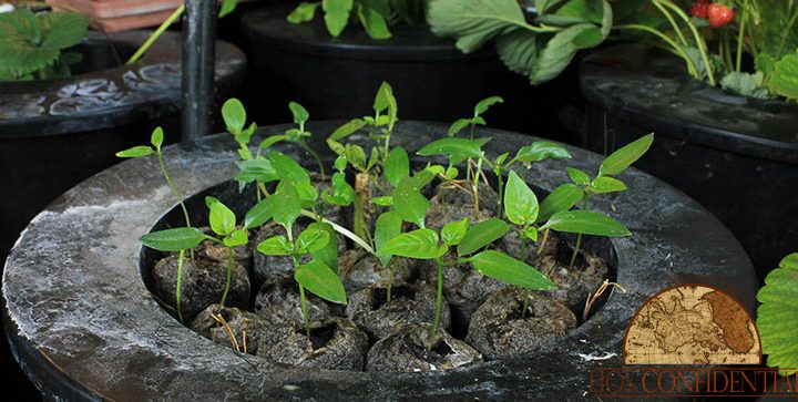 hydroponics and gardening - Self-sufficient life in Belize