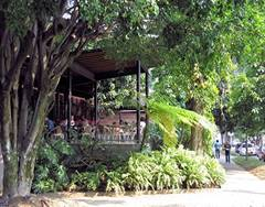 view from a medellin sidewalk of a cafe surrounded by lush green plants
