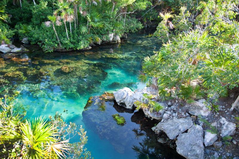 Jungle stream in belize