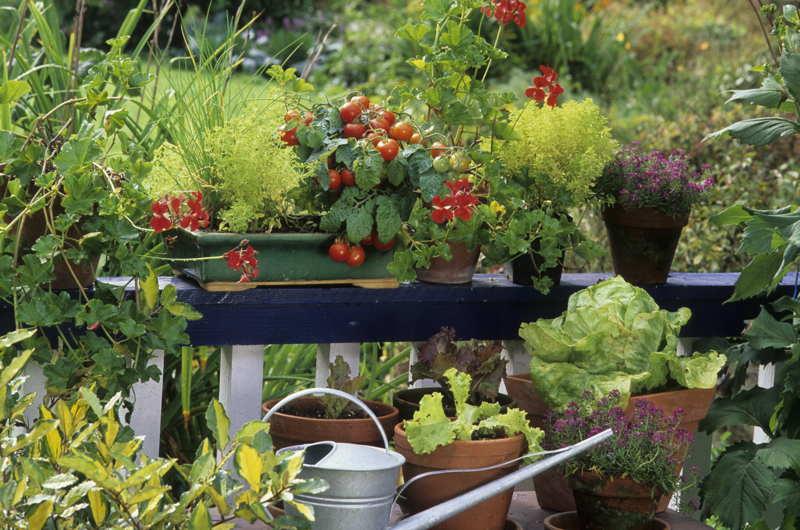 balcony with plants and veg growing