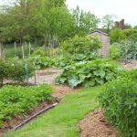 Vegetable garden.