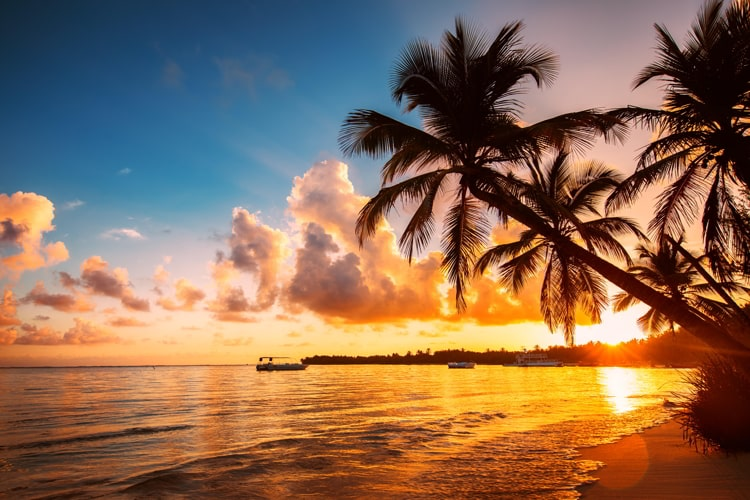 Palmtree silhouettes on the tropical beach, Dominican Republic.